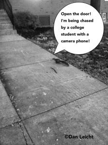 ChaseSceneSquirrel